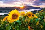 Rising Sun...