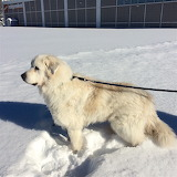Cooper in the Snow