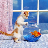 Kitten and Goldfish...
