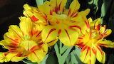 #Yellow Flowers