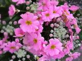 Flower-seasons