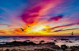 Pink Sunset with Seagulls