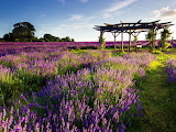 Fields of Lavender With Rest Spot