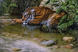 Jungle tiger painting by Lee kromschroeder