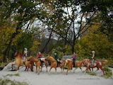 fall parade of golden horses
