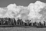 Clouds - and trees