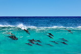 Dolphins in Margaret River