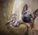 The dog with the owl