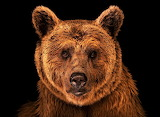 #Syrian Brown Bear