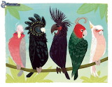 Kakadus und papageien