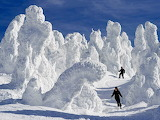 Mount Zao snow monsters