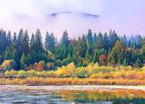 Foggy riverside