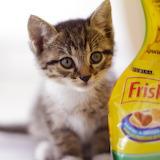 ☺Frisky Kitten...