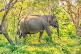 Sri Lanka Parks Elephants Yala National Park Side 513500 1280x85
