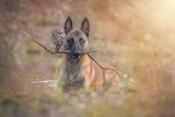 Shepherd dog a litle owlet stick