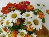 ^ Shasta Daisy, Zinnia and Lantana flowers