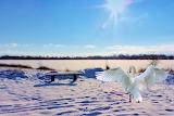 swan near the lake