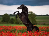 ❤️Black Beauty...