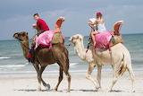 Tunisia-Camel rides on the beach