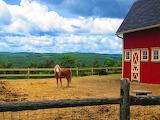 Scenic Horse Farm
