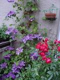 Backyard-ideas-balcony-decorating-flowers-plants-22