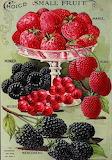 Frutti di bosco-