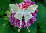 Superbe papillon