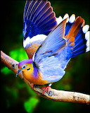 Colorful bird photography