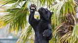 Pantera-animals-plants