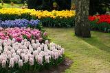 Colorful-flower-garden-1313402376a19