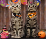 ☺♥ Trick or treat!...