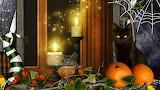 1492971-gorgerous-halloween-cat-