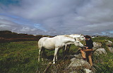 Ponies in Connemara