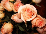 Seven-year-roses-