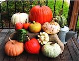 #Autumn Harvest Display