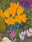 "Flowers tumblr dogstardreaming Krokus (Crocus) ""Adolf Dietrich"""
