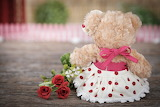 Flowers, toy, roses, bouquet, bear, teddy, roses, cute