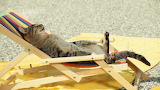 Funny_weird_cat_pictures_widescreen_wallpapers_for_free