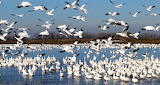 Merced wildlife reserve