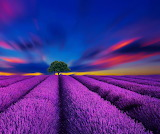 ☺♥ Overwhelming colors of a field of lavender...
