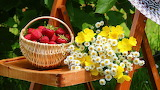 Zzmix-fruits-flowers-images