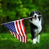 🇺🇸God Bless America...