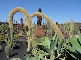the cactus garden, Lanzarote
