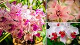 Conociendo-las-orquideas