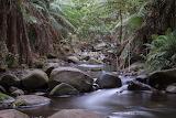 Bushland Stream