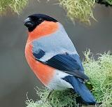 Best bird#807