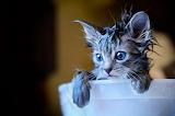 Flea Bath...