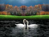 Beautiful-Birds-