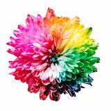 Colors de Flors