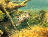 Bass-fish-images-27